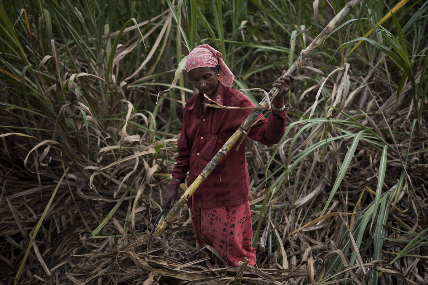 "Kamalamma (55), a day labourer, harvests sugarcane in the village of Madhar Halli. She is paid 2 rupees (about 0.02 euros) per bundle of sugarcane, and in a day manages to earn 200 rupees. ""But at least we always take some money home. The farmer can make much more, but he can also loose everything if the crop fails."""