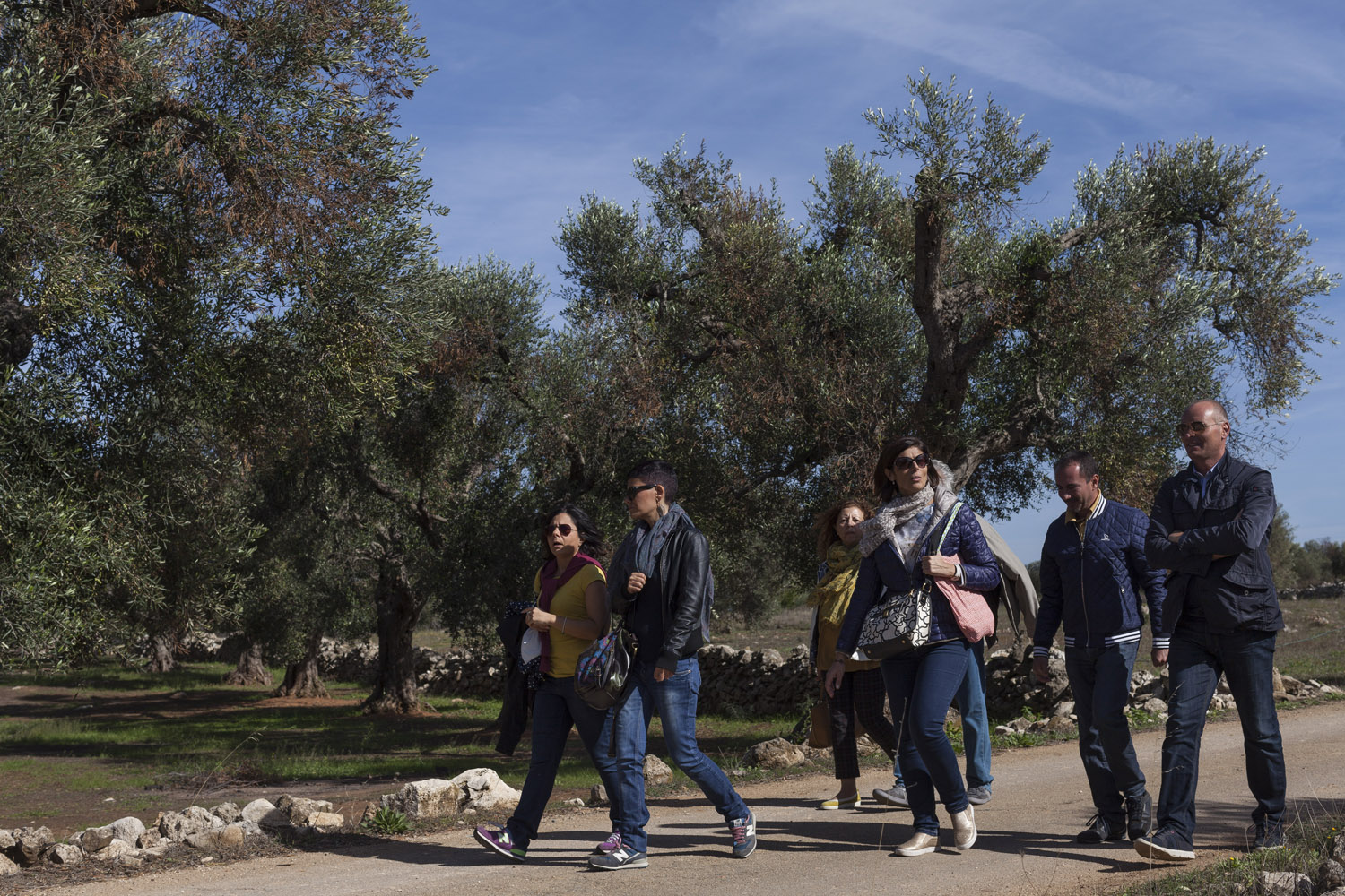 "Tourists take part in a Sunday walk ""among the olive trees"" organized by the town of Caprarica di Lecce, just as the disease had began affecting the area. (2017)"