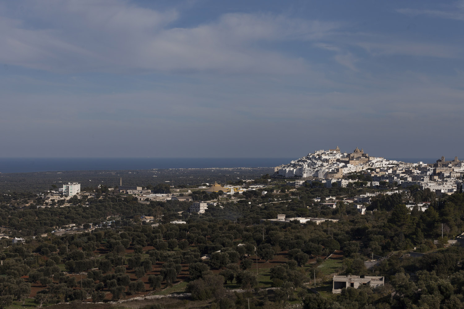 "The town of Ostuni rises above the ""Piana degli Ulivi"" (the plain of the olive trees), an endless expanse of olive groves that stretches all the way to the sea, and is currently in the containment zone of the Xylella fastidiosa outbreak. (2017)"