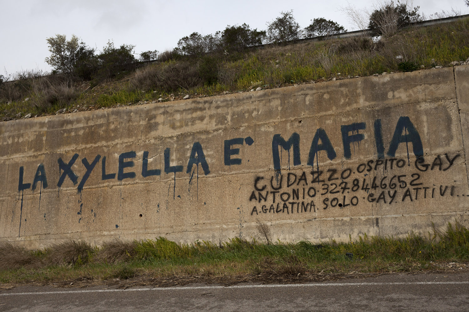 "A graffiti along one of Salento's main roads denounces the entire Xylella affair as ""mafia"". This view of the outbreak as a conspiracy or an outright lie to force a wide-ranging transformation of the region's agriculture, landscape and identity is very common in Puglia, and has led to much oppositions to the authorities' efforts to contain it. (2017)"
