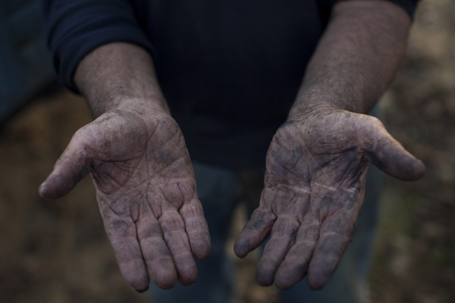 The hands of an olive grower from Salento show the signs of decades spent tending to olive trees, which are truly a work of art since in their natural state, known as olivaster, they are simply bushes of shrub that bear almost no fruits. (2015)