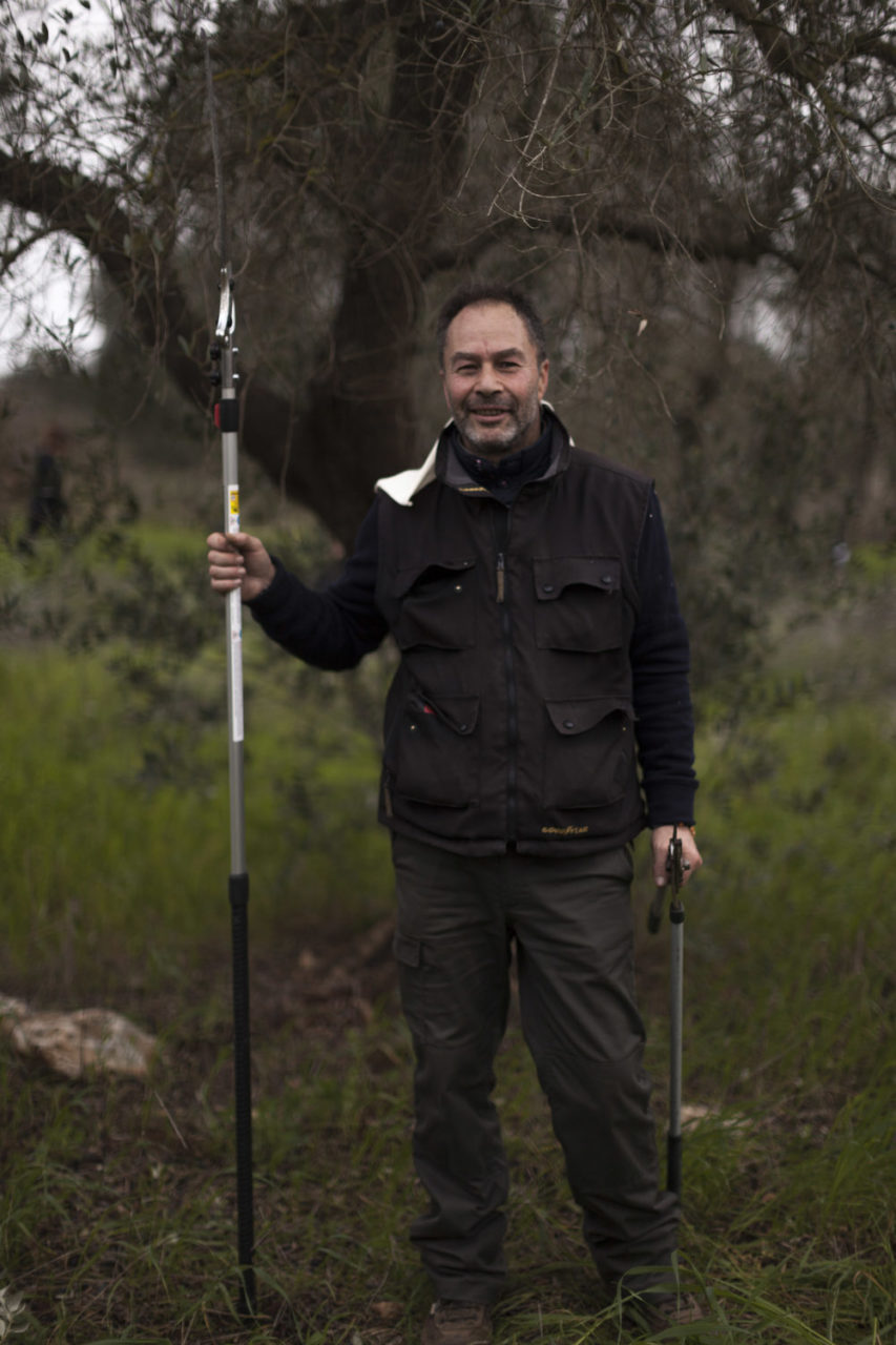 A participant in the olive tree pruning regional championship of Puglia, held at a farm confiscated from the mafia in San Vito dei Normanni, in Salento.
