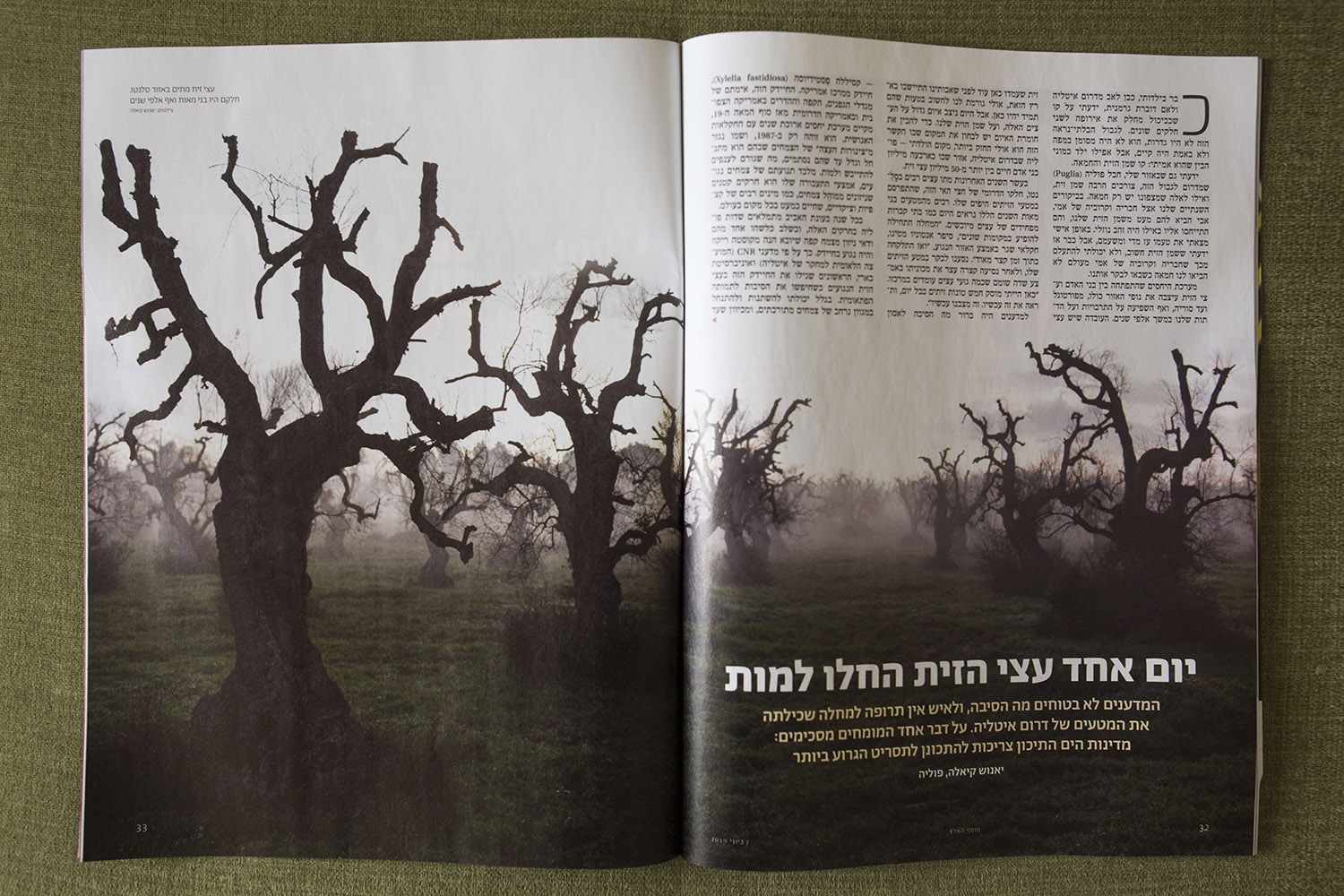 Ha'aretz weekend magazine: The olive trees of Puglia in the time of Xylella. (June 2019) link to story