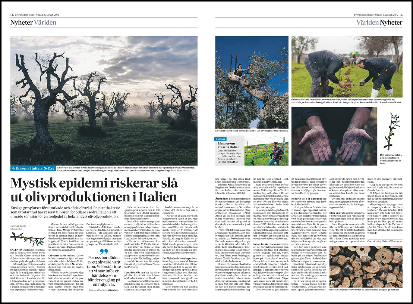 Svenska Dagbladet: The olive trees of Puglia in the time of Xylella. (July 2019) link to story