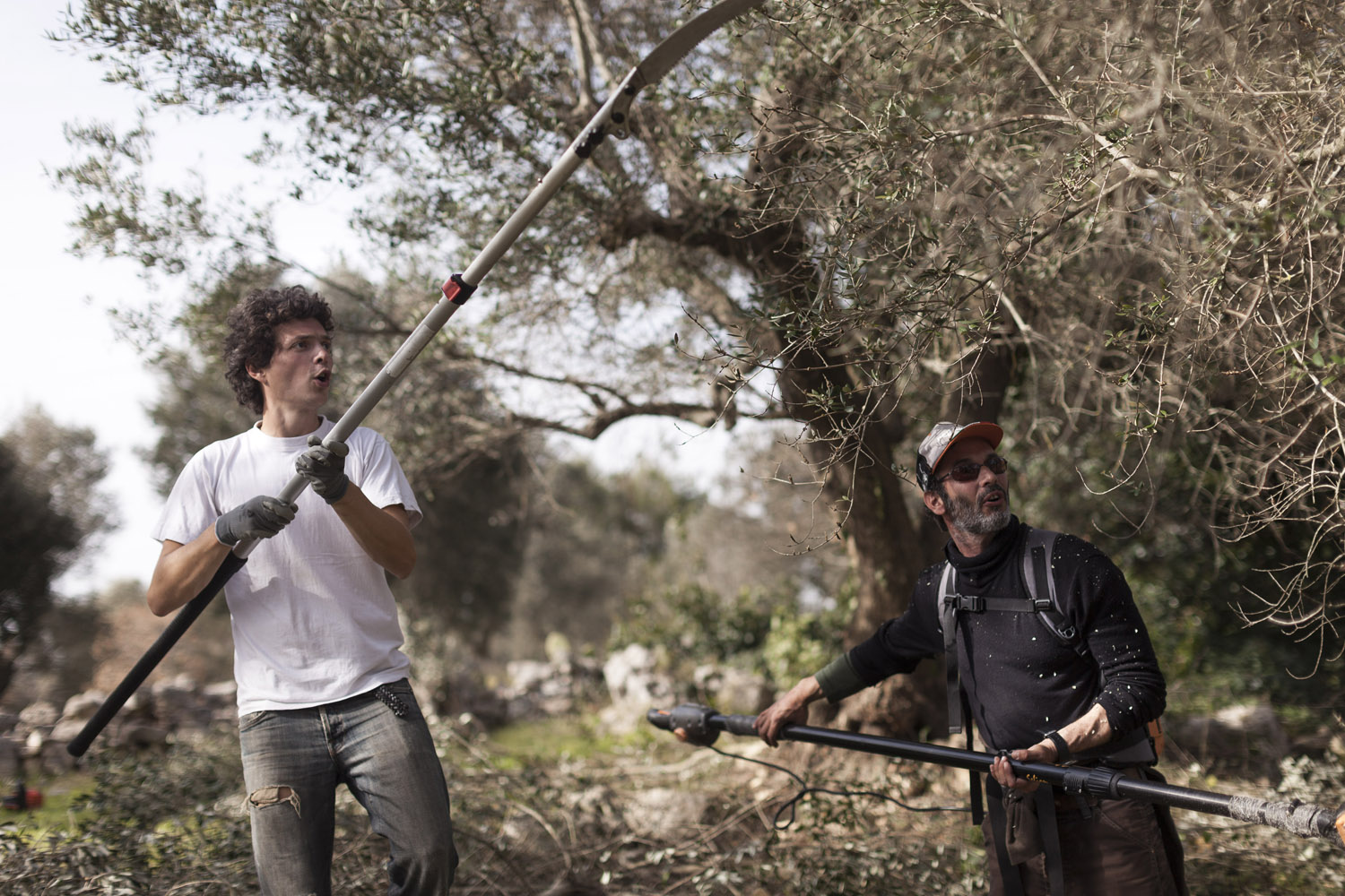 Pruning Mihnea's trees, in the countryside of Lecce. (2019)