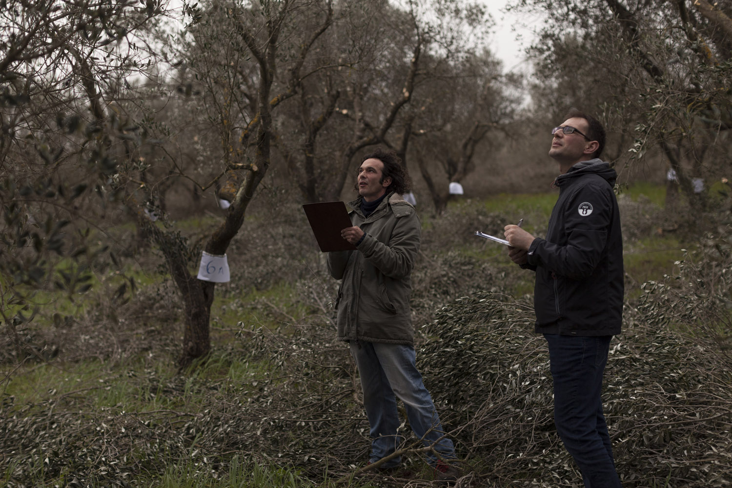 Judging the results of Puglia's regional championship for policonic-vase pruners, in an educational farm confiscated from the mafia in San Vito dei Normanni. (2017)
