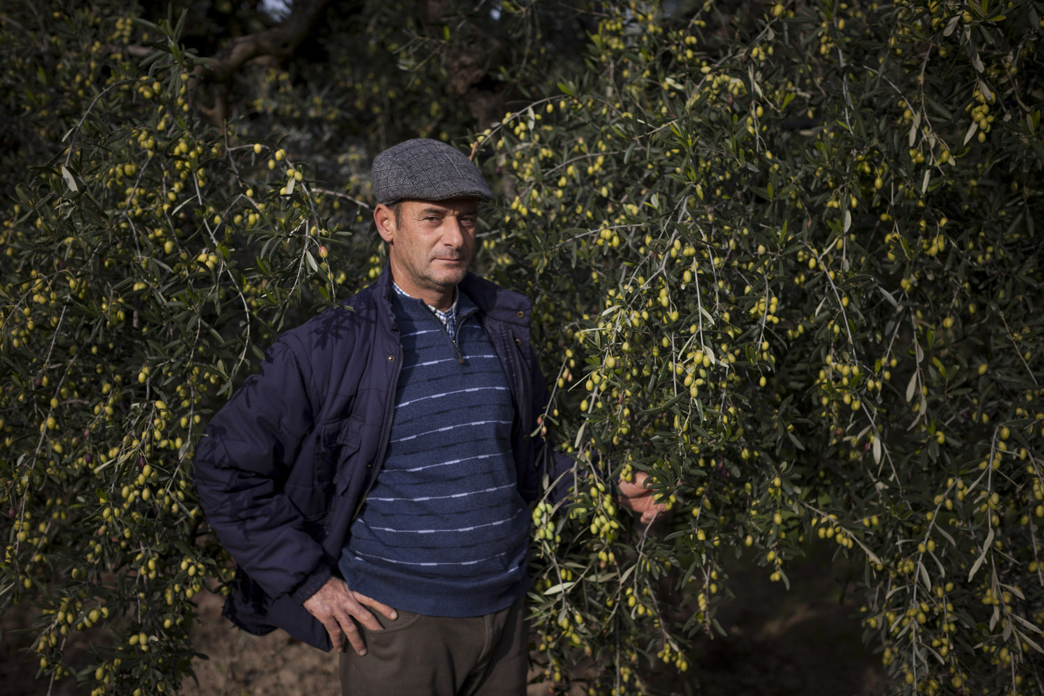 An olive grower proudly shows his olives in the countryside of Andria. (2016)