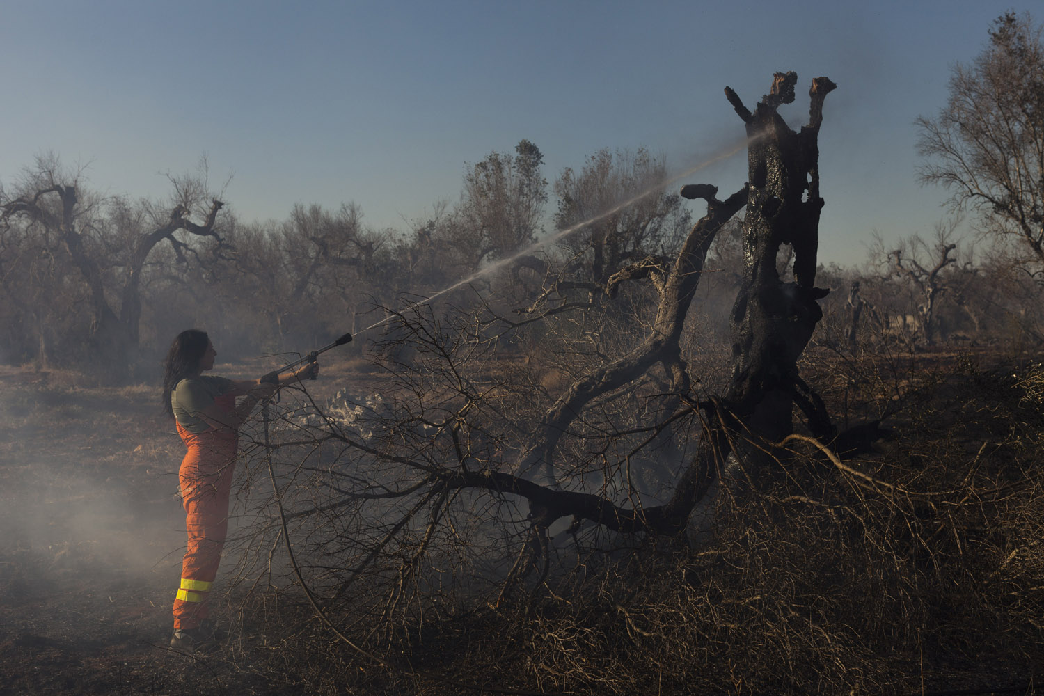 It can take thousands of litres of water to extinguish a burning olive tree, an effort that seems somewhat pointless considering that the trees are already dead. As a result, the fire brigade and the civil protection volunteers limit themselves to making sure the fires don't spread to the neighbouring fields, and leave the olive trees to burn and crumble into ashes.