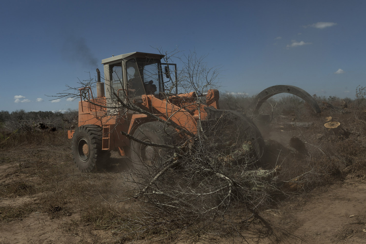 Olive wood is notoriously tough, and years after the trees are dead, chainsaws are often to unable to cut through them, which means that large machines must be used, their noise echoing through the deserted countryside.