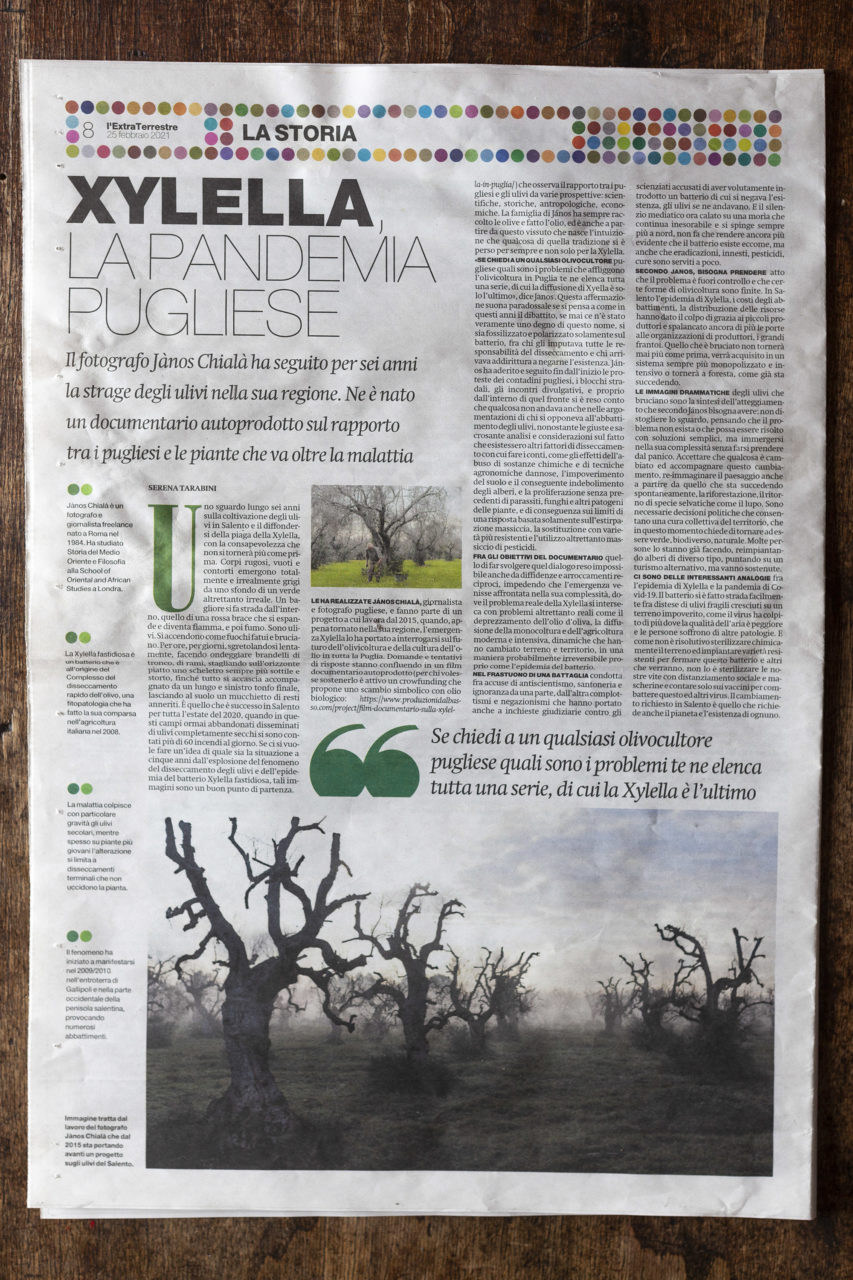 Il Manifesto: The olive trees of Puglia in the time of Xylella.(February 2021) link to story